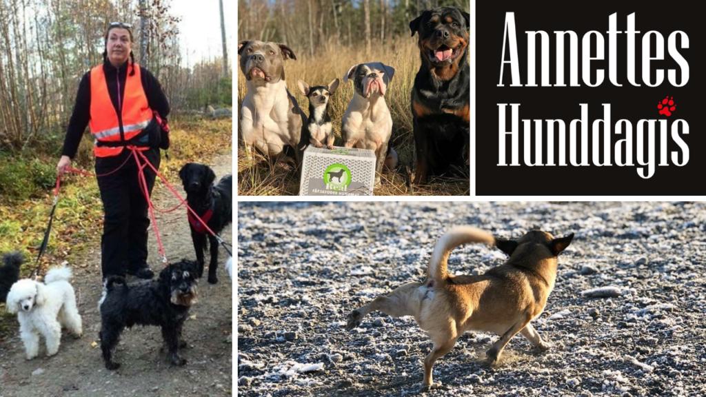 Annettes-hunddagis-med-hundar